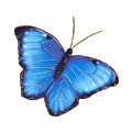 Coll butterflies blue