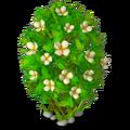 Res jasmine 1.png