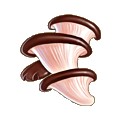 Coll mushroom oyster.png