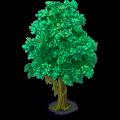 Cedar small.png