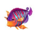 Coll fish royal angel.png