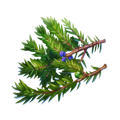 Juniper branches.png