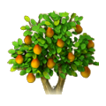 Pear tree.png