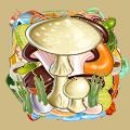 Coll mushroom death cap.png