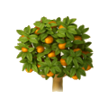 Orange tree.png
