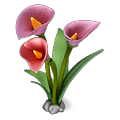 Res calla lilies 1.png