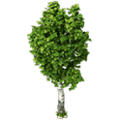 Res birch 2.png