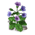 Res lungwort 1.png