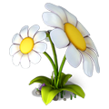 Res chamomile 4.png
