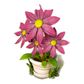 Pink aster deco