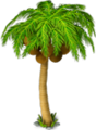 Coconut palm.png