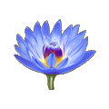Coll flower lotus