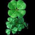 Clover plant