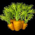Carrot plant