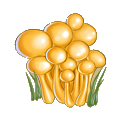 Coll mushroom armillaria.png