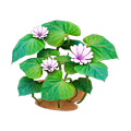 Sweet potato plant.png