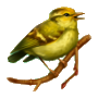 Coll birds yellowhammer.png