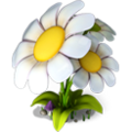 Res chamomile 3.png