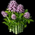 Cane plant