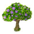 Spring tree purple blooms
