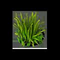 Res garden grass 1.png