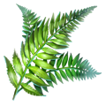Fern leaves.png