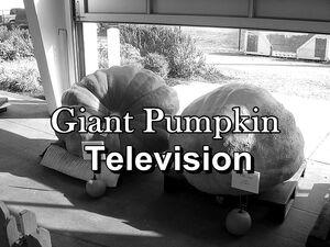 640px-CompetitivePumpkins