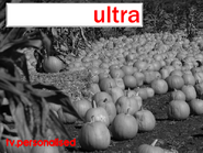 Ultra TV Pumpkin Patch Ident 2002