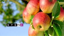 Eye tv1 apples
