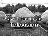 Giant Pumpkin Television