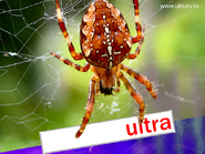 Ultra TV Spider Ident 2001