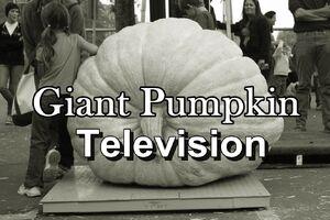 Giant pumpkin nick ares
