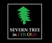Severn Tree 1969