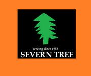 Severn Tree 1975
