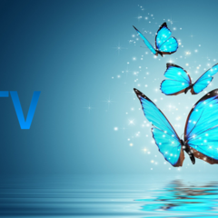 ID ident (Butterfly, 2010-2014)