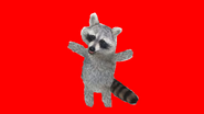 Ultra yes racoon