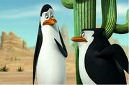 Kowalski and skipper