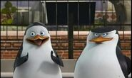 Private-and-Skipper-penguins-of-madagascar-11457882-444-265
