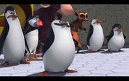Pingwins 21