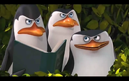 Pingwins 18