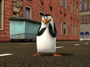 Rico-or-Roger-penguins-of-madagascar-26849952-640-480