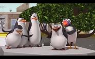 Pingwins 16