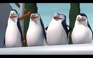 Pingwins 27