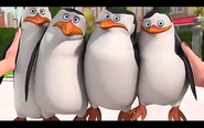 Pingwins 11