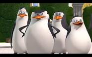 Pingwins 8