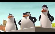 Pingwins 17