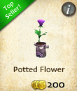 Potted Flower