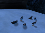Icestorm birds