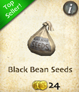 Black Bean Seeds