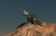 Levi fly
